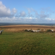 Ponies in sunshine on Gibbet Hill Hill